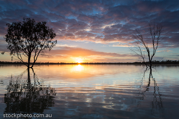 australia;background;beautiful;beauty;blue;branch;bright;color;colorful;dark;dawn;evening;forest;hattah;horizontal;kulkyne;lake;landscape;light;line;morning;mournpall;national;natural;nature;orange;outdoor;park;pond;ray;reflection;scene;scenery;silhouette;sky;sun;sunlight;sunrise;sunset;travel;tree;trees;view;water;wild;wood;yellow