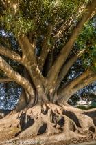 burke;tree;wills