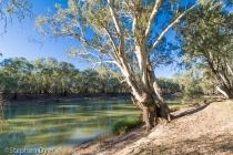 australia;bush;forest;nyah;plants;state;tree;victoria