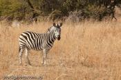 adventure;africa;african;animal;antelope;black;conservation;environment;grass;gr